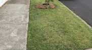lawn-mowing-service-gardening-melbourne-quote6